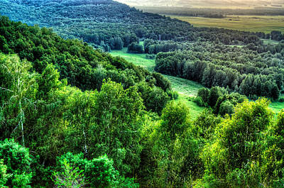Photograph - Lush Green Forest by John Williams