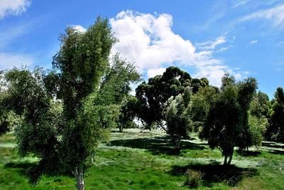 Photograph - Lush Green Hilltop Full Of Trees by Matt Harang