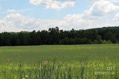 Photograph - Lush Green Meadow In Rural Western New York by Rose Santuci-Sofranko