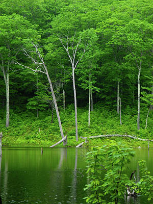 Photograph - Lush Green Pond by Raymond Salani III