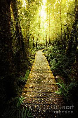 Boardwalk Wall Art - Photograph - Lush Green Rainforest Walk by Jorgo Photography - Wall Art Gallery