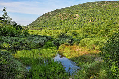 Photograph - Lush Greenery by John M Bailey