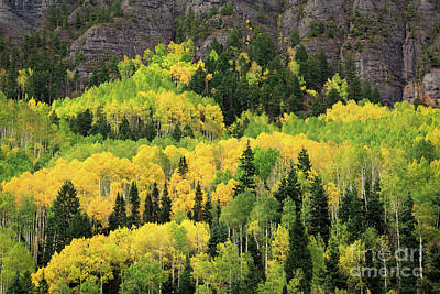 Photograph - Lush Lime Green Autumn by Doug Sturgess