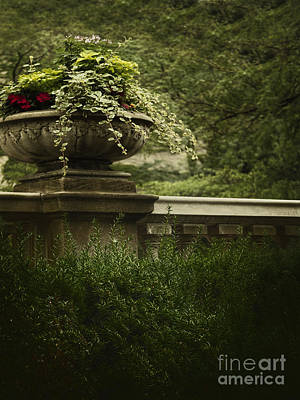 Stone Planter Photograph - Lush by Margie Hurwich