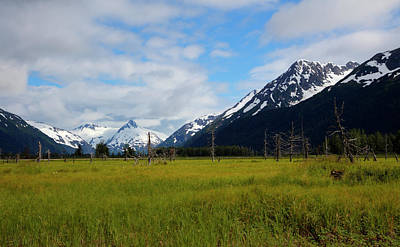 Photograph - Lush Meadow In Alaska by Gloria Anderson