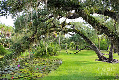 St. Lucie County Photograph - Lush Oak Arches by Liesl Walsh