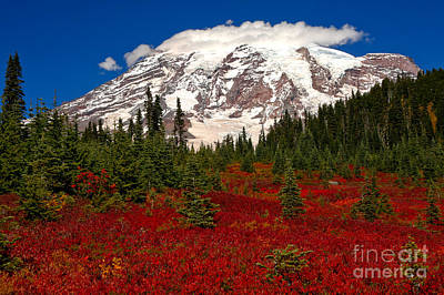 Photograph - Lush Red And Green At Paradise by Adam Jewell