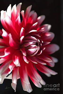 Photograph - Lush Side Dahlia by Joy Watson