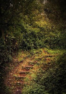 Photograph - Lush Steps by Wim Lanclus