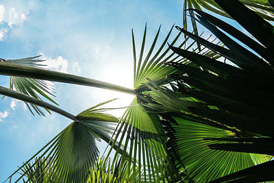 Photograph - Lush Tropical Palm Tree Up Perspective by Alexandre Rotenberg
