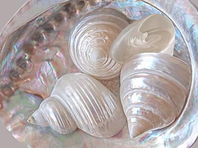 Shells Photograph - Lustrous Shells by Gill Billington