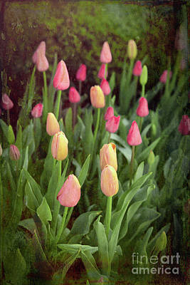 Photograph - Tulips Starting To Bloom by Lynn Sprowl