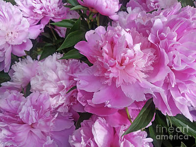 Photograph - Luxury Of Peonies by Jasna Dragun