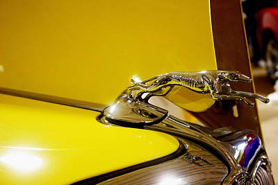 Greyhound Photograph - Luxury by Toni Hopper