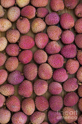 Lychee Fruit Art Print by Tim Gainey