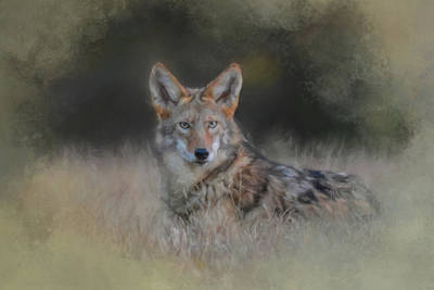 Coyote Art Painting - Lying In Wait by Jai Johnson