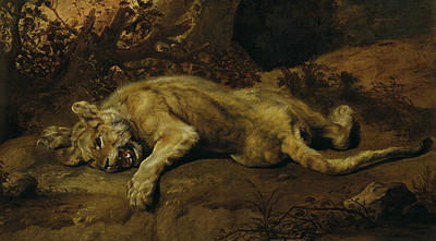 Painting - Lying Lioness by Frans Snyders