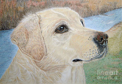 Scottish Dog Drawing - Lynwater Sunny Alex by Yvonne Johnstone