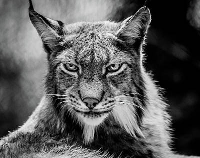 Photograph - Lynx Portet by Mario Visser