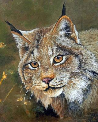 Lynx Portrait Original
