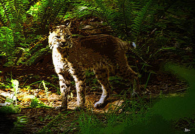 Lynx Rufus Art Print by David Lee Thompson