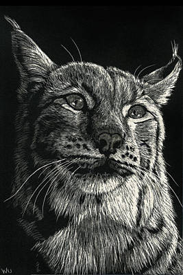 Drawing - Lynx by William Underwood