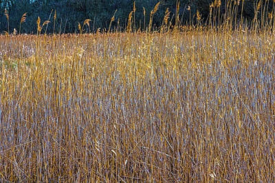 Photograph - Lyons Prairie And Marsh In Cary Il Dsc6508 F263 by Raymond Kunst