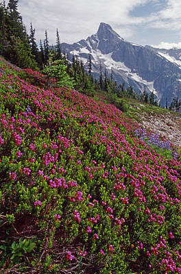 Photograph - M-04263 Wildflowers And Luna Peak by Ed Cooper Photography