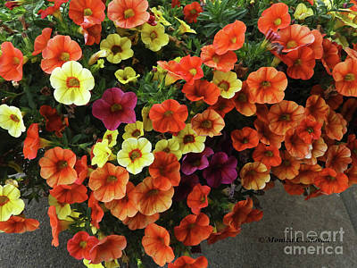 Photograph - M Garden Flowers No. Gf12 by Monica C Stovall