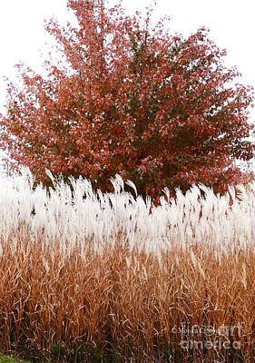 Photograph - M Landscapes Fall Collection No. Lf46 by Monica C Stovall