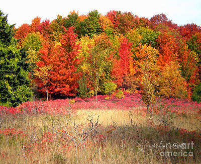 Photograph - M Landscapes Fall Collection No. Lf47 by Monica C Stovall