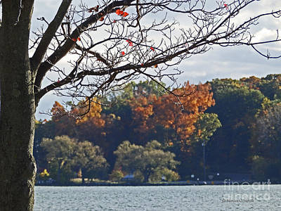 Photograph - M Landscapes Fall Collection No. Lf51 by Monica C Stovall