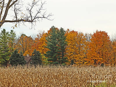 Photograph - M Landscapes Fall Collection No. Lf60 by Monica C Stovall
