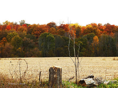 Photograph - M Landscapes Fall Collection No. Lf66 by Monica C Stovall