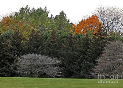 Photograph - M Landscapes Fall Collection No. Lf67 by Monica C Stovall