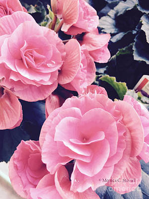 Photograph - M Shades Of Pink Flowers Collection No. P63 by Monica C Stovall