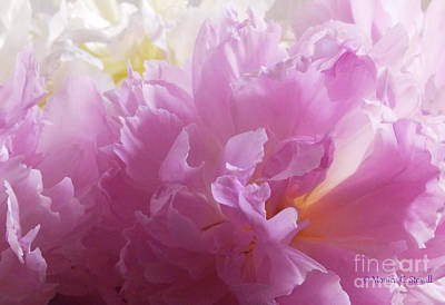 Photograph - M Shades Of Pink Flowers Collection No. P72 by Monica C Stovall