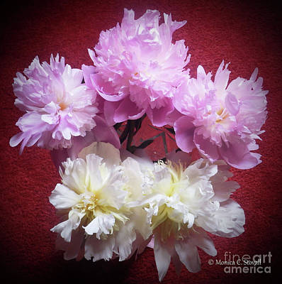 Photograph - M Shades Of Pink Flowers Collection No. P73 by Monica C Stovall