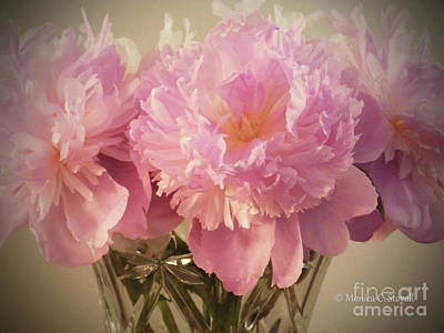 Photograph - M Shades Of Pink Flowers Collection No. P75 by Monica C Stovall