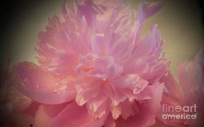 Photograph - M Shades Of Pink Flowers Collection No. P78 by Monica C Stovall