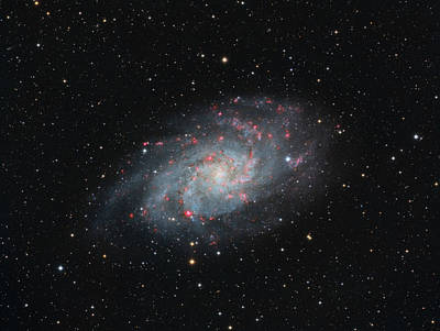 Photograph - M33 - Triangulum by Dennis Sprinkle