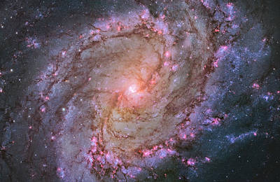 Photograph - M83 by Ricky Barnard