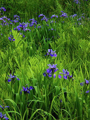 Photograph - Ma At Irises by Raymond Salani III