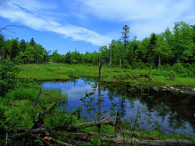 Photograph - Ma At Pond by Raymond Salani III