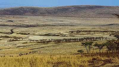 Photograph - Maasai Warrior Herding Cattle by Marilyn Burton