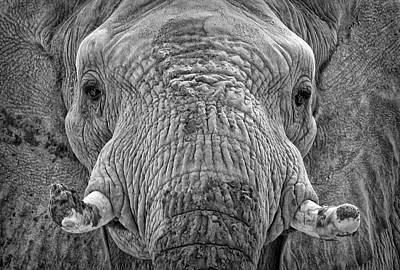 Mabu Up Close N Personal Art Print