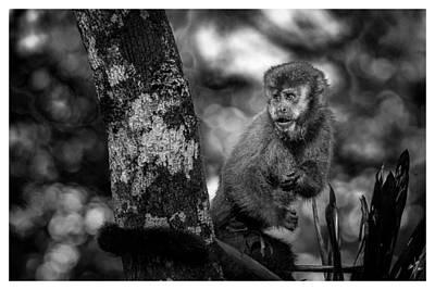 Photograph - Macaco Prego II by Carlos Mac