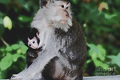 Photograph - Macaque Madonna by Cassandra Buckley