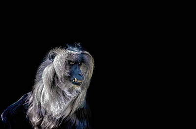 Thailand Wildlife Photograph - Macaque by Martin Newman