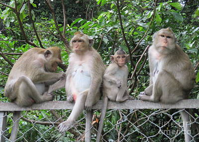 Photograph - Macaque Monkeys 3 by Randall Weidner